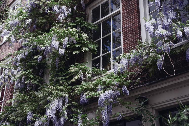 Purple-flowers-around-window Jpg